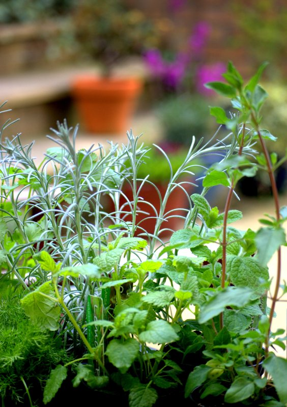 herbs to fight foodborne illness