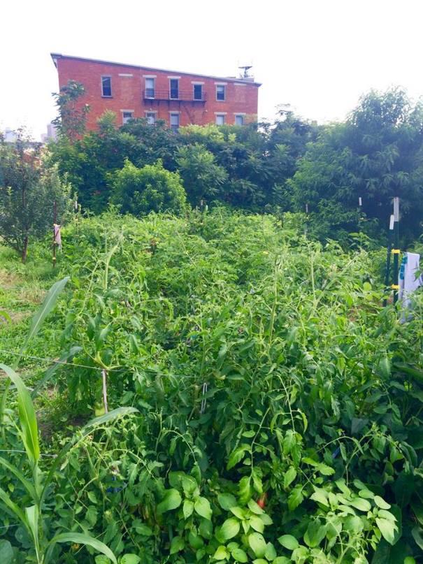 Permaganic urban garden