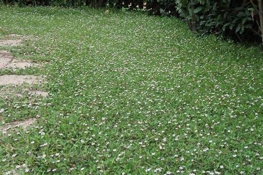 Q di Qualit del terreno migliorare la fertilit e la gestione del suolo con le piante