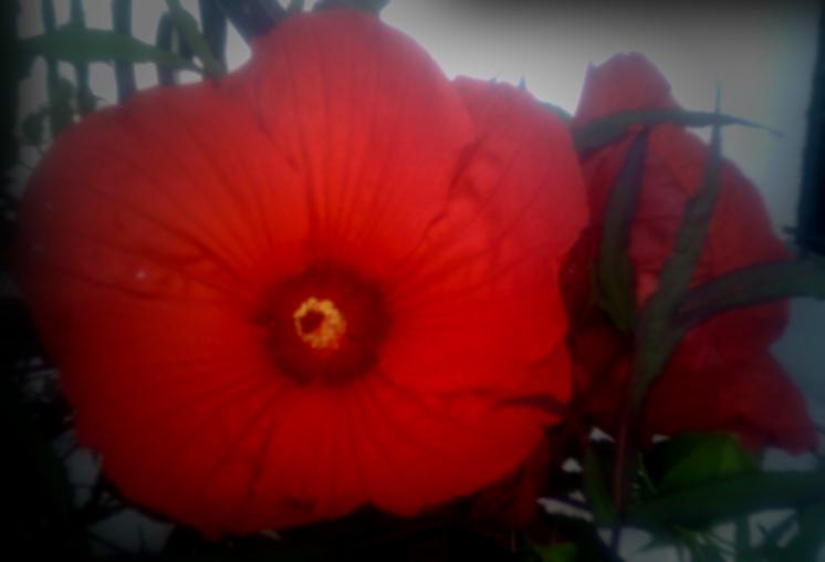 summer-flowers-71611_5942696023_o