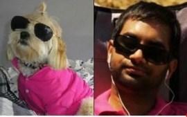 Celebrity Dogs 1