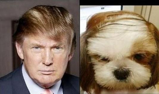 Celebrity Dogs 10