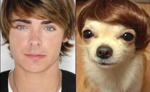 Celebrity Dogs 11