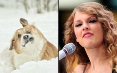 Celebrity Dogs 18