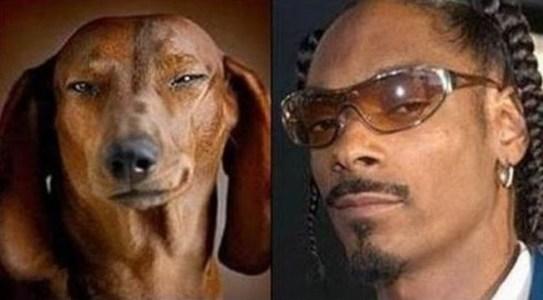 Celebrity Dogs 8