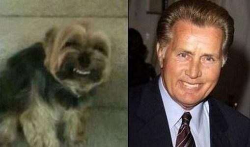 Celebrity Dogs 9