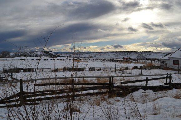 Pasture in Boulder, UT