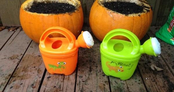 plant a pumpkin