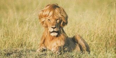 León con flequillo