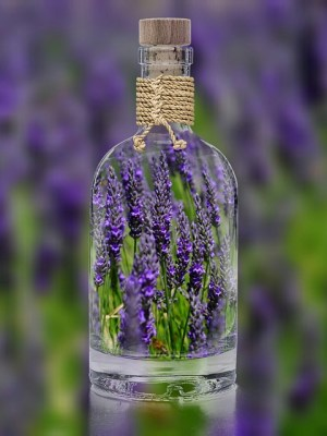 echter Lavendel