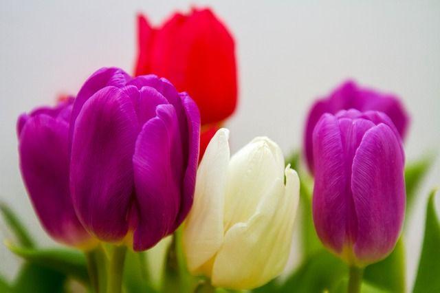 Mit guter Laune in den Frühling