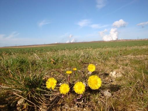 Kraftwerke-mit-Blumengruß
