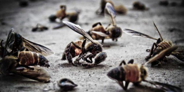 Kalifornia: Przechodnia filmuje, jak martwe pszczoły klaszczą na ziemi między dwiema antenami 5G !!