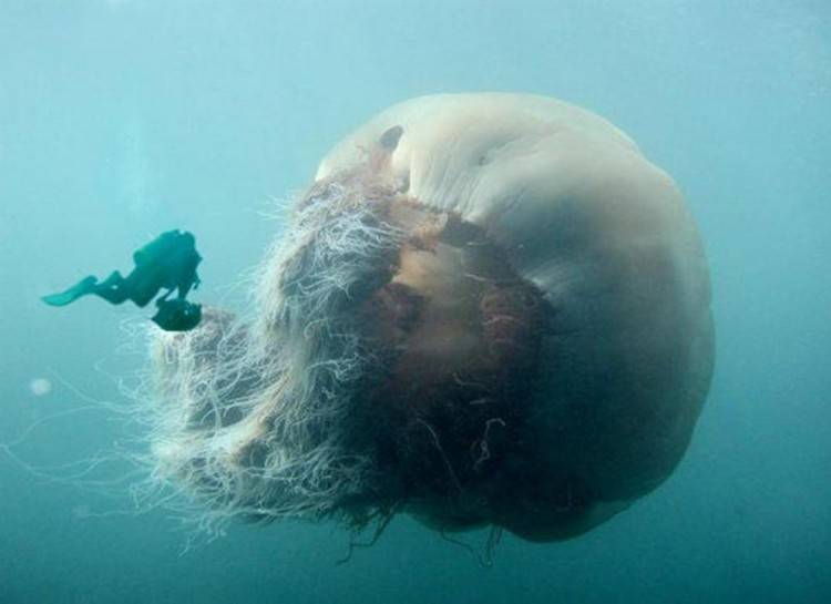 Terrifying Pictures Of What Lives In Our Oceans