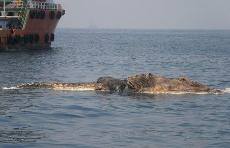 02-strange-creature-found-persian-gulf-whale