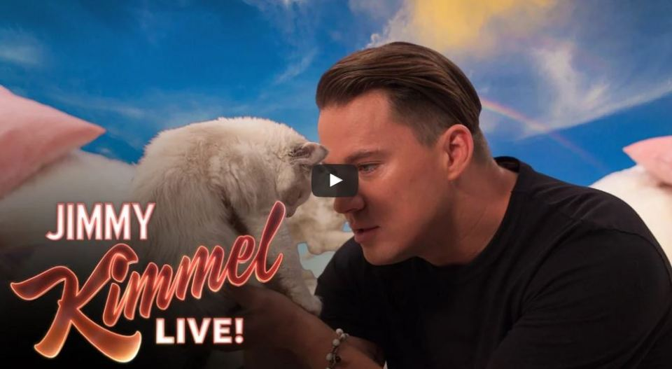 Watch Channing Tatum Says 8 Hateful Things To A Kitten