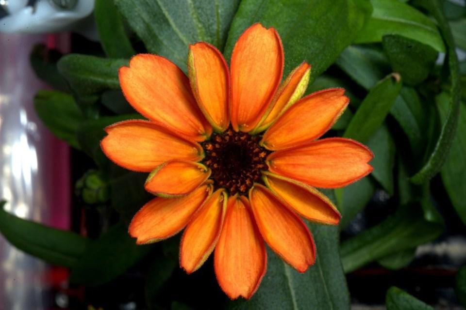 space-flower
