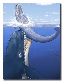 The Prehistoric Whale With 14-Inch Teeth