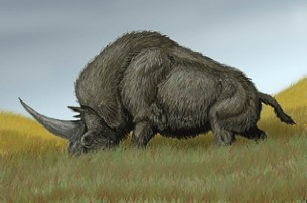 New Fossil Discovery Suggests Unicorns Might Have BeenReal