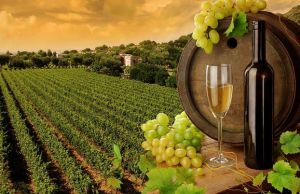 India's Best Wine Trails