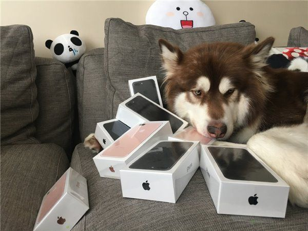 Son of China's Richest Man Showing Off His Dog's 8 iPhone 7