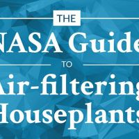 Best Air-Cleaning Plants For Your Home Revealed By NASA