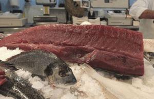 Tuna Sliced In Half, Refusing To Die