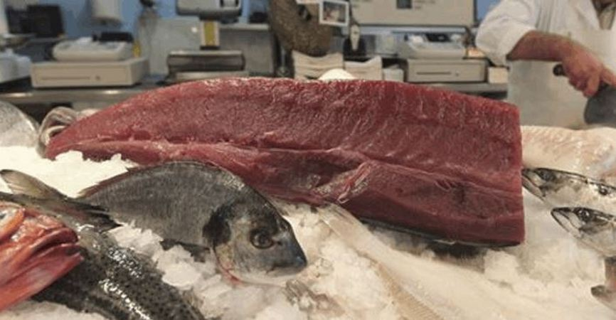 Tuna Sliced In Half, Refusing To Die