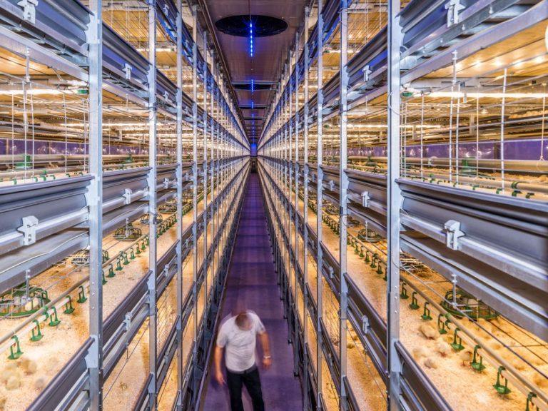Netherlands-Agriculture