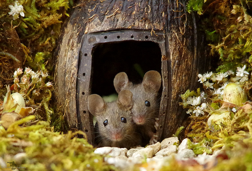 miniature-mice-family-house-simon-dell