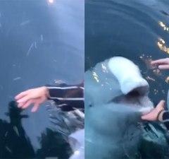 beluga-whale-returns-iphone
