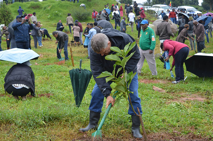 350-million-trees-planted-record-green-legacy-ethiopia