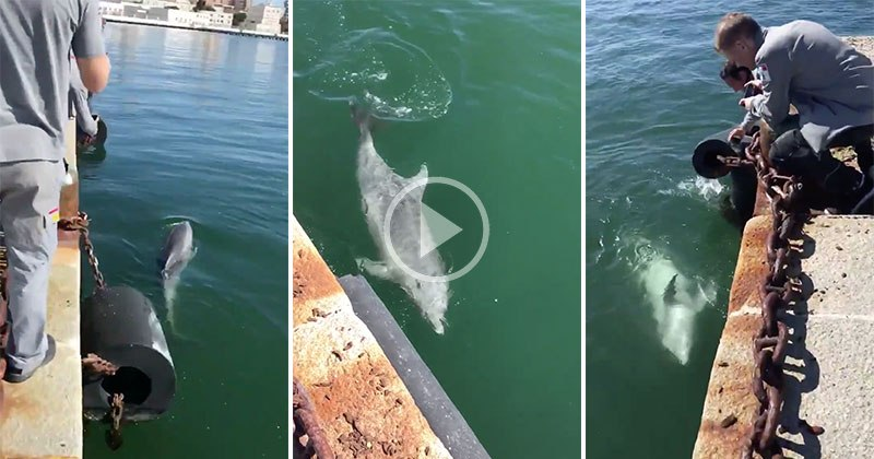 dolphins-return-to-italy