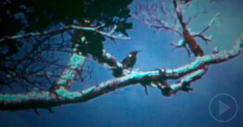 Last Bird of Its Species