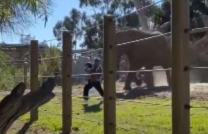 Zoo Elephant Attacks