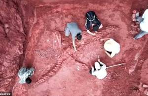 Giant Dinosaur Skeleton Found in China