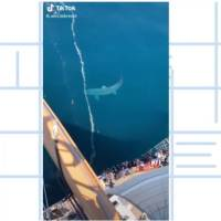 'Is That a Megalodon?' Massive Shark Caught on Camera
