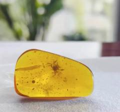 100-Million-Year Old Crab Stuck in Amber