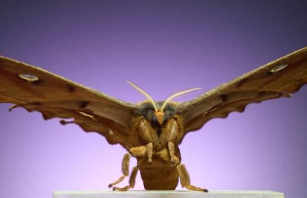 Moths Flight Sequence