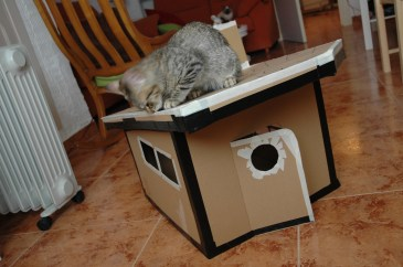 juanito and his cardboard house