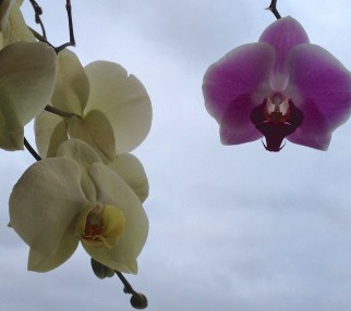 orchids and fog