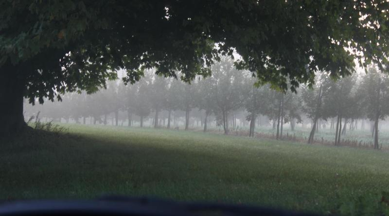 Wilmot's Orchard in the fog