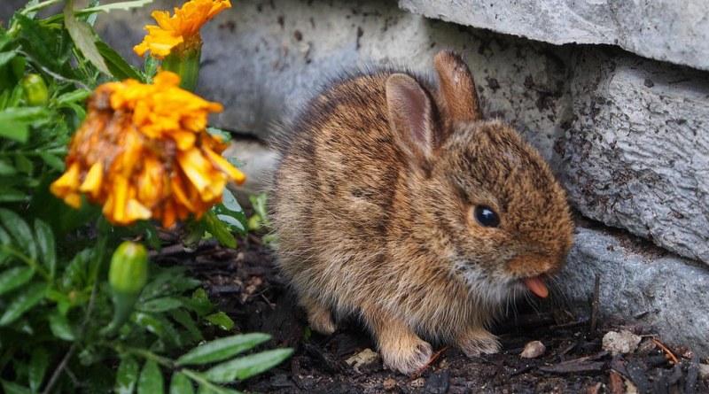 Fierce Bunny