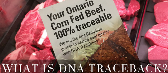 What is DNA Traceback - ONCornFedBeef