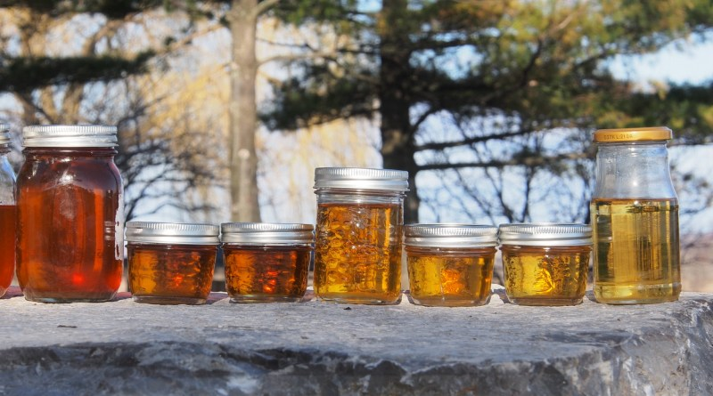 Homemade Maple Syrup - graded by colour