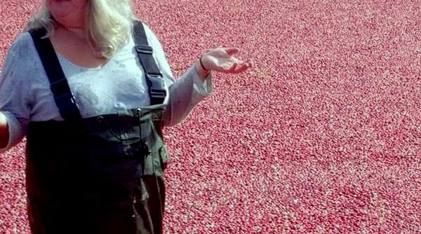 From Inside The Bog: 9 Things You Don't Know About Cranberry Farming