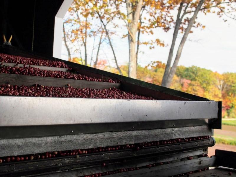Hayden Cranberry Separator