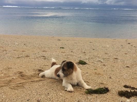 T-Rex enjoying the sand