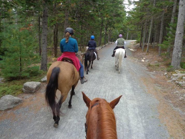 horseback-acadia
