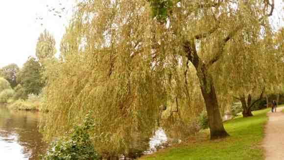 Eine winderschöne Weide am Ufer der Aussrnalter